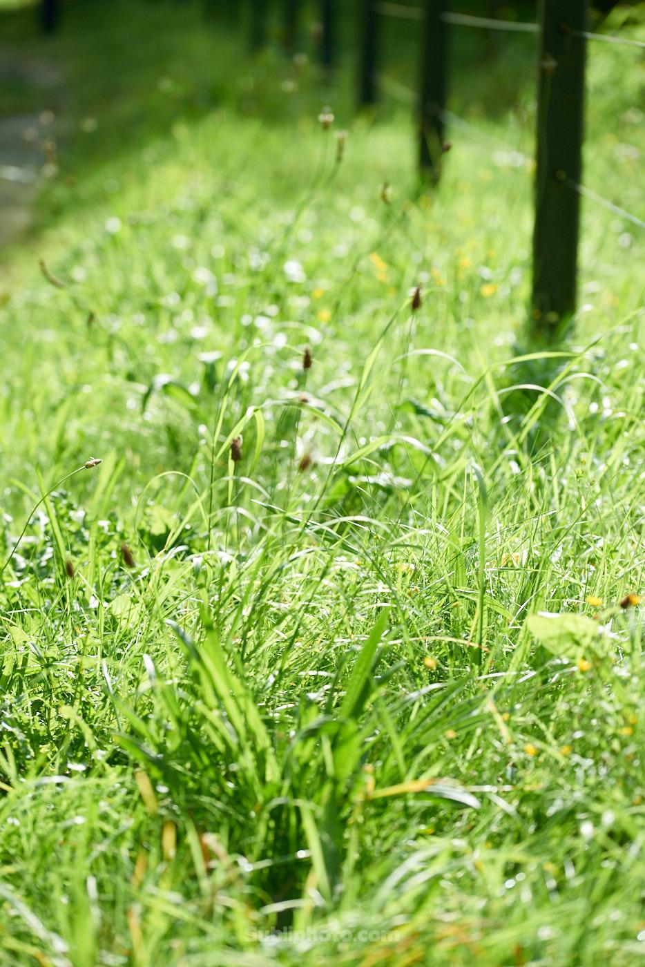 Conférence : Les plantes messagères, un chemin de reconnexion à soi.